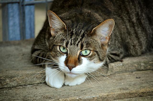 gato-araña-dueña|